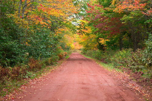 red road fall leaves.jpg